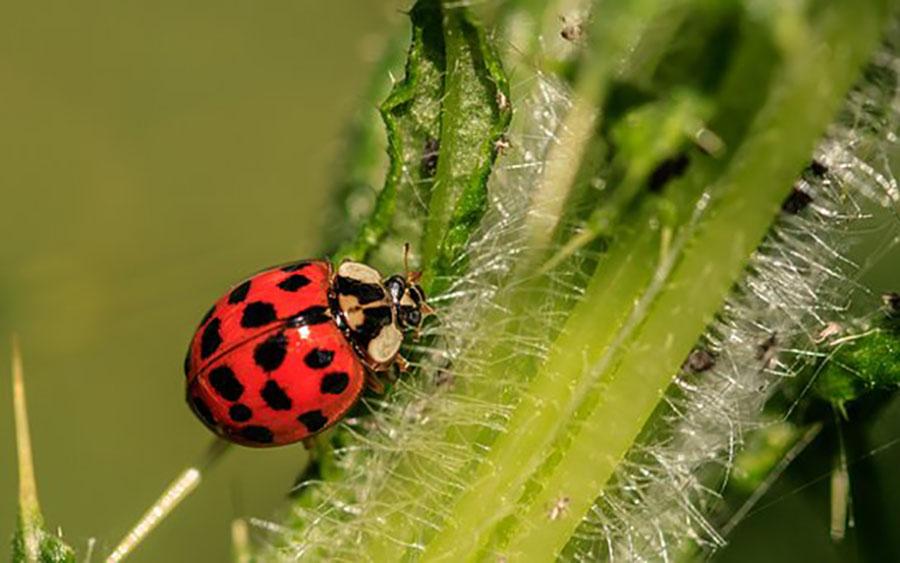Venta de pesticidas y control de plagas en Concepcion