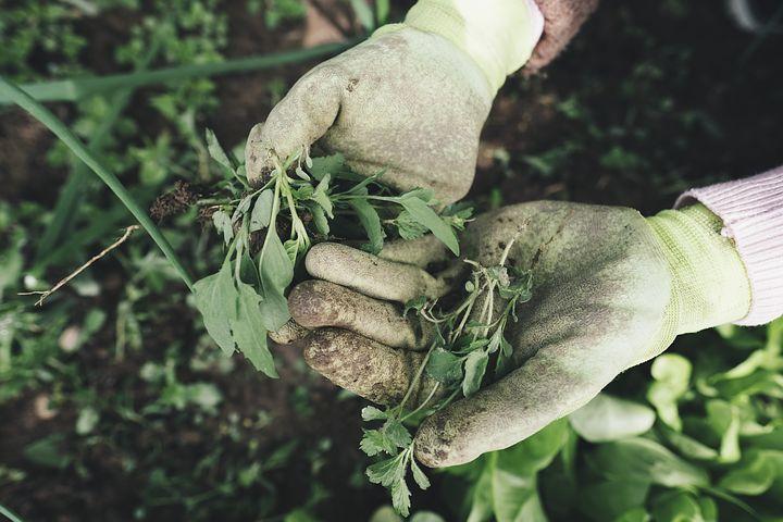 Venta de herbicidas en Concepción