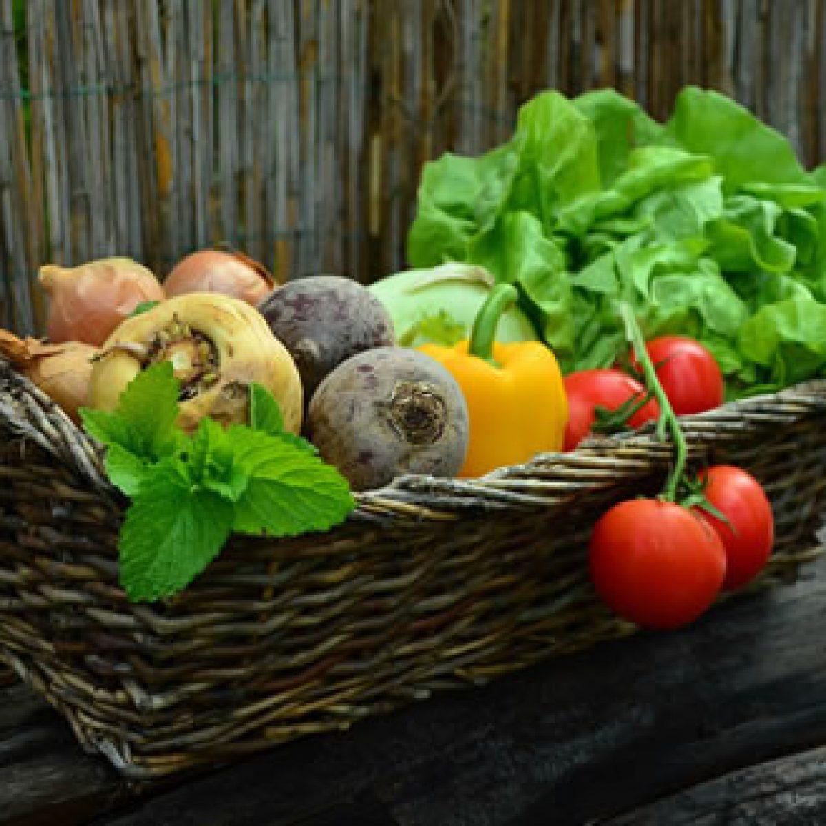 Productos de Jardinería y Hortalizas