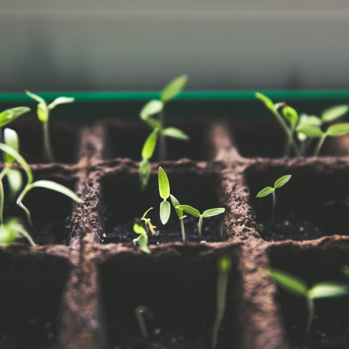 Productos Agroquímicos