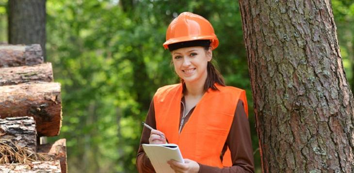 Servicio de ingeniero forestal en la region del BioBio Concepcion