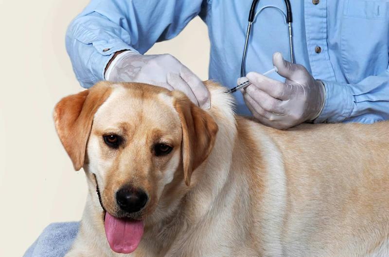 Venta de antiparasitarios para perros y gatos en Concepcion